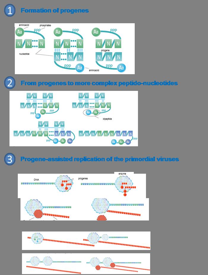 The progene theory (adopted from http://www.vechnayamolodost.ru/pages_48/drugienaukiozhizni/troyka_shesterka_kod.html)